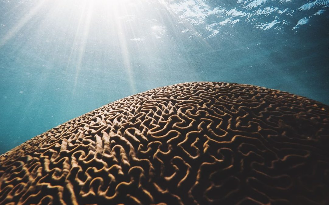 ocean acidification and coral reef underwater with sun shining in from surface