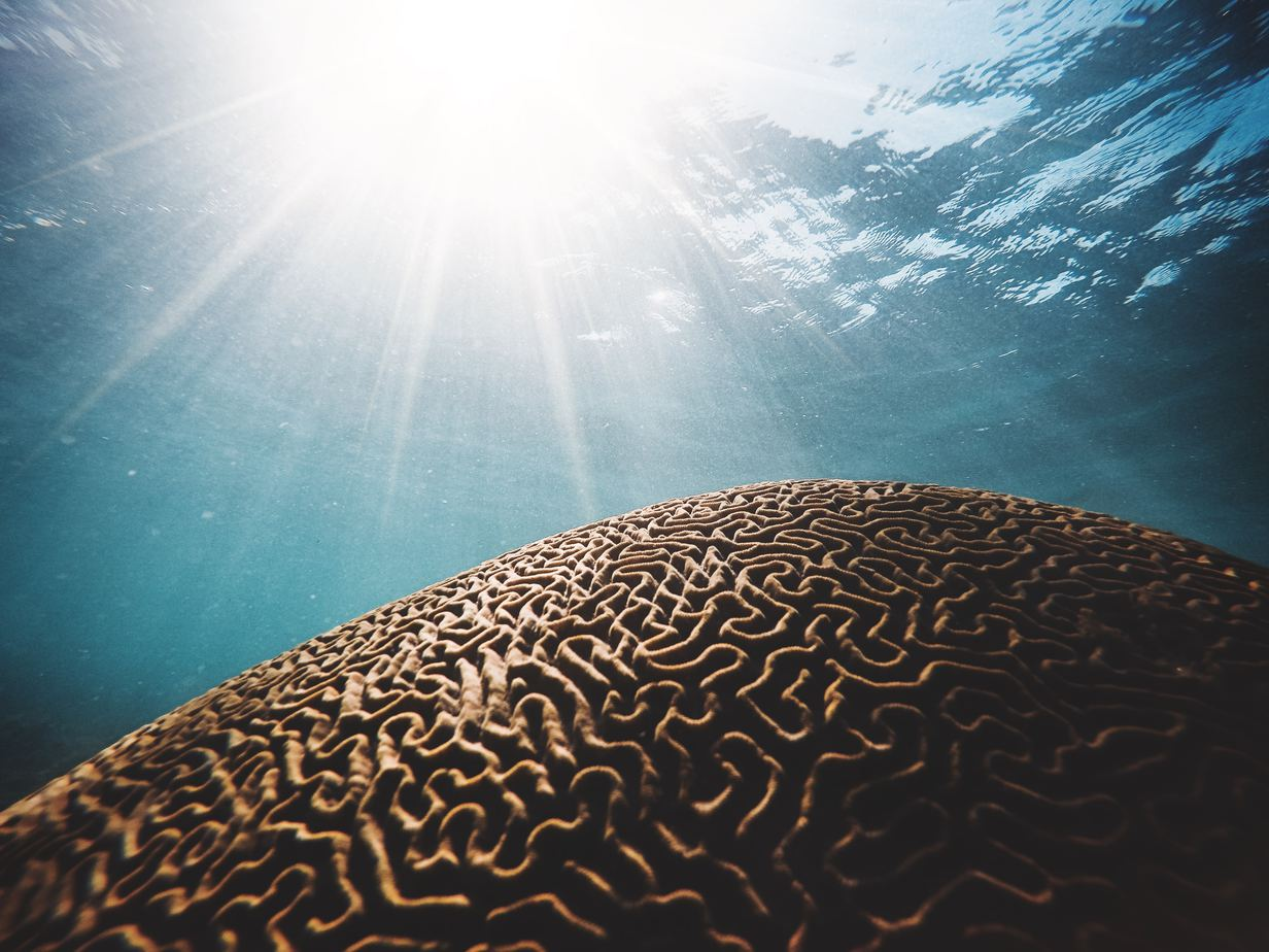 coral reef underwater with sun shining in from surface